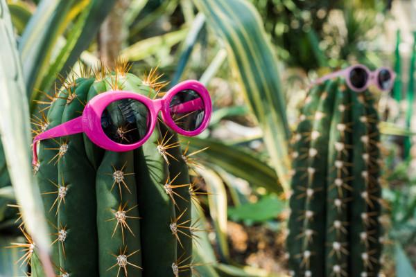 image cactus.jpg (89.7kB)