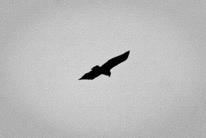 image noir.jpg (0.2MB)