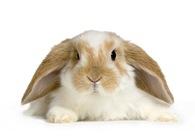 rosemarry_rabbit3.jpg
