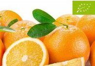 agrumesbio_orange-bio.jpg