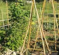 plantations_jardin.jpg