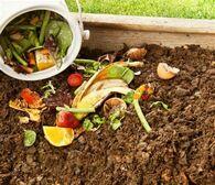 toutsurlecompost_compost.jpg